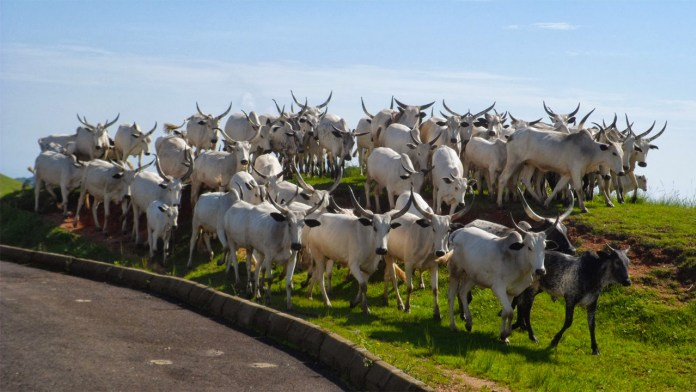 Herdsmen/Farmers Conflict Inimical To FG's Agricultural Policy, Says Commissioner