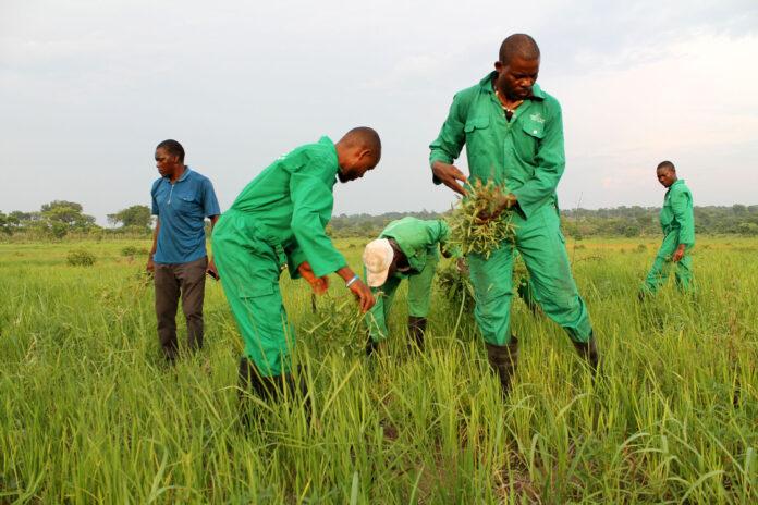 Farmers Urge Federal Govt, States To Bring Back School Farming System